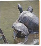 Turtle Trio Wood Print