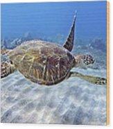 Turtle Underwater 3 Wood Print