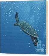 Turtle With Divers' Bubbles Wood Print