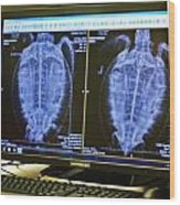 Turtle X-ray Wood Print