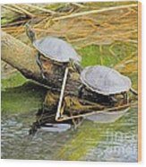 Turtles At The National Zoo Wood Print