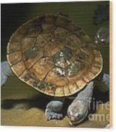 Turtles Float Wood Print