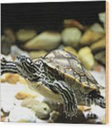 Turtles In The Water Wood Print