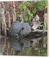 Turtles  Wood Print by Julie Cameron