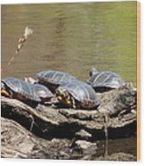 Turtles Wood Print
