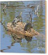 Turtles On Stump Wood Print