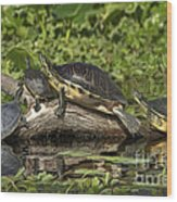 Turtles Sunning Wood Print