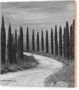 Tuscan Cedars Wood Print
