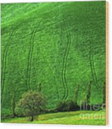 Tuscan Hills 05 Wood Print by Giorgio Darrigo