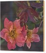 Tuscan Sun Rose Wood Print