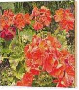 Tuscany Flower Garden Wood Print