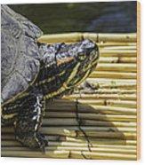 Tutle On Raft Wood Print