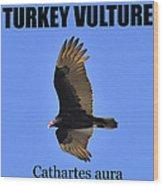 Turkey Vulture Educational Wood Print