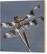 Twelve-spotted Skimmer Wood Print