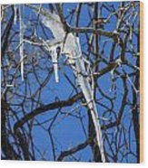Twigs And Ice Wood Print