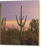 Twilight After Sunset In The Cactus Forests Of Saguaro National Park Wood Print
