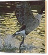 Twilight Goose I Wood Print