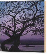 Twilight On Hilo Bay Hawaii Wood Print