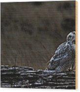 Twilight Owl Wood Print