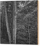 Twilight Woods #1 Wood Print