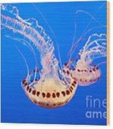 Twin Dancers - Large Colorful Jellyfish Atlantic Sea Nettle Chrysaora Quinquecirrha  Wood Print