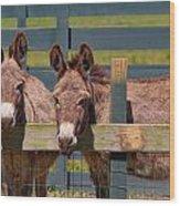 Twin Donkeys Wood Print