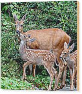 Twin Fawns And Mother Deer Wood Print