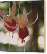 Twin Fuchsias Wood Print