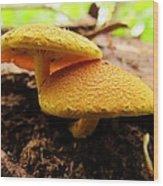 Twin Fungi Wood Print
