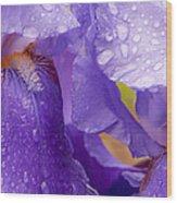 Twin Iris Wood Print