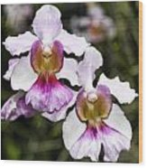 Twin Orchids Wood Print