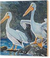 Da208 Twin Pelicans By Daniel Adams Wood Print
