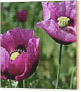 Twin Poppies Wood Print