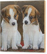 Twin Puppies Portrait Wood Print