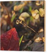 Twin Spotted Wintergreen Pods Wood Print
