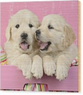 Twin White Labs In Pink Basket Wood Print by Greg Cuddiford