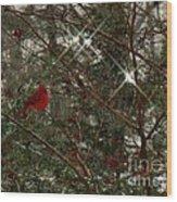 Twinkle Twinkle Little Bird Wood Print by Sharon Costa
