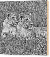 Twins V2 Wood Print