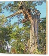 Twirling Tree Path Wood Print