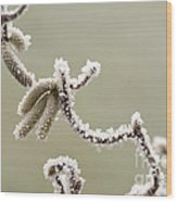 Twisted Frost Wood Print by Anne Gilbert