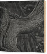 Twisted Tree Wood Print