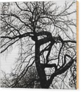 Twisted Tree In Black And White Wood Print