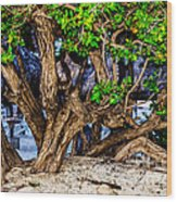 Twisted Trunks Wood Print