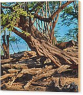 Twisting Trees Wood Print