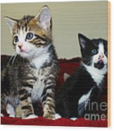 Two Adorable Kittens Wood Print