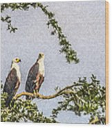 Two African Fish Eagles Haliaeetus Vocifer  Wood Print