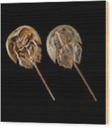 Two Atlantic Horseshoe Crabs Wood Print