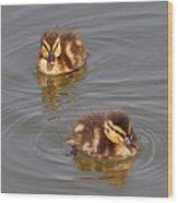 Two Baby Ducklings Wood Print