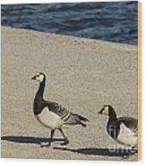 Two Barnacle Geese Wood Print