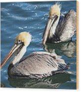 Two Beautiful Pelicans Wood Print